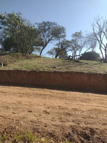 foto - Suzano - Jardim Ana Rosa (Palmeiras)